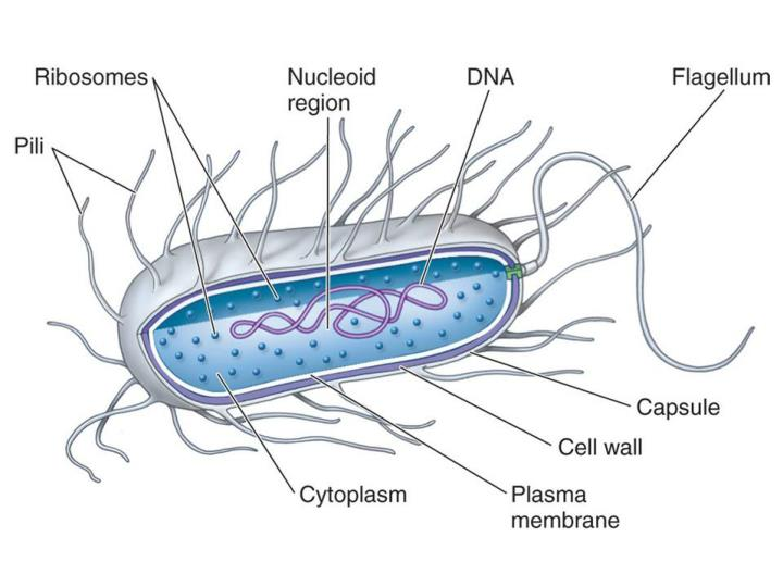 Prokaryotes chapter 19