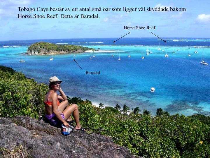 Tobago Cays består av ett antal små öar som ligger väl skyddade bakom Horse Shoe Reef. Detta är Baradal.
