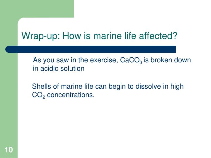 Wrap-up: How is marine life affected?