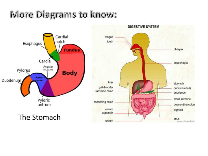 More Diagrams to know: