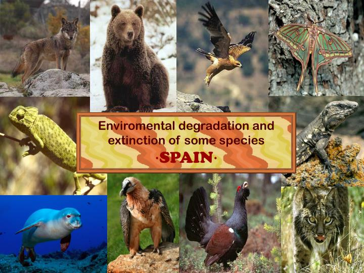 Enviromental degradation and extinction of some species