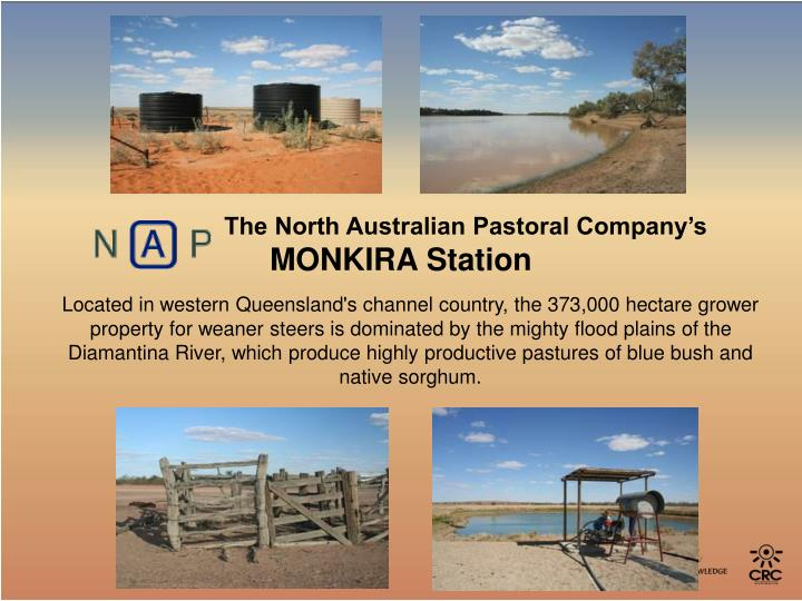 The North Australian Pastoral Company's