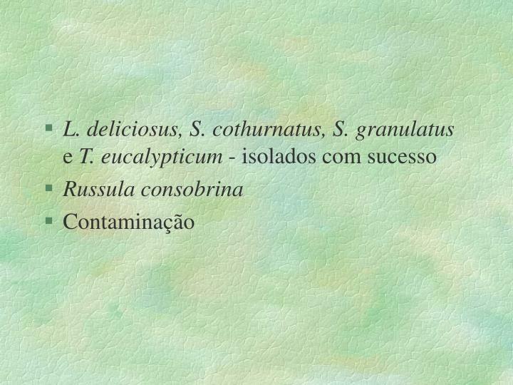 L. deliciosus, S. cothurnatus, S. granulatus