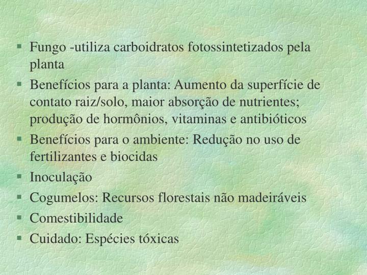 Fungo -utiliza carboidratos fotossintetizados pela planta