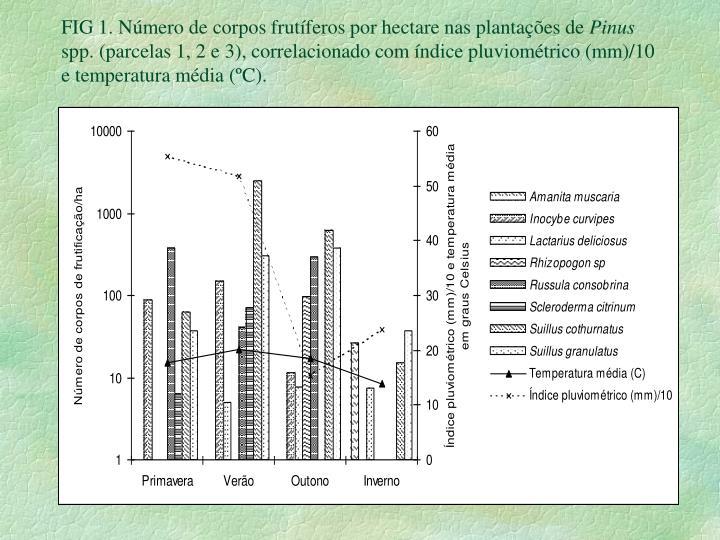 FIG 1. Número de corpos frutíferos por hectare nas plantações de