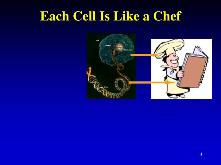 Each Cell Is Like a Chef