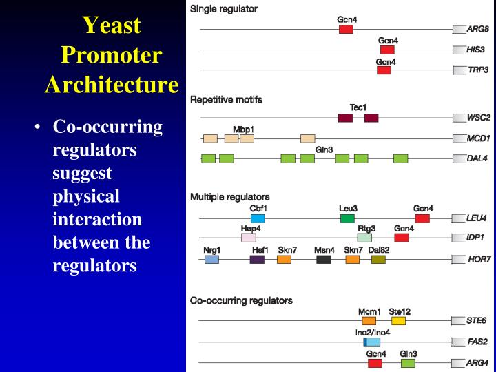 Yeast Promoter Architecture