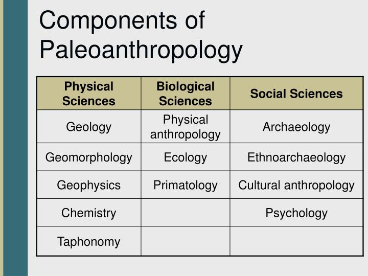 Components of Paleoanthropology
