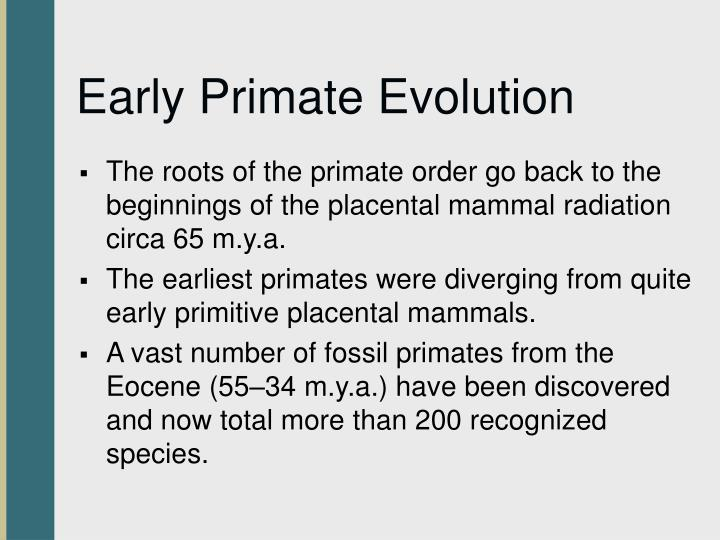 Early Primate Evolution