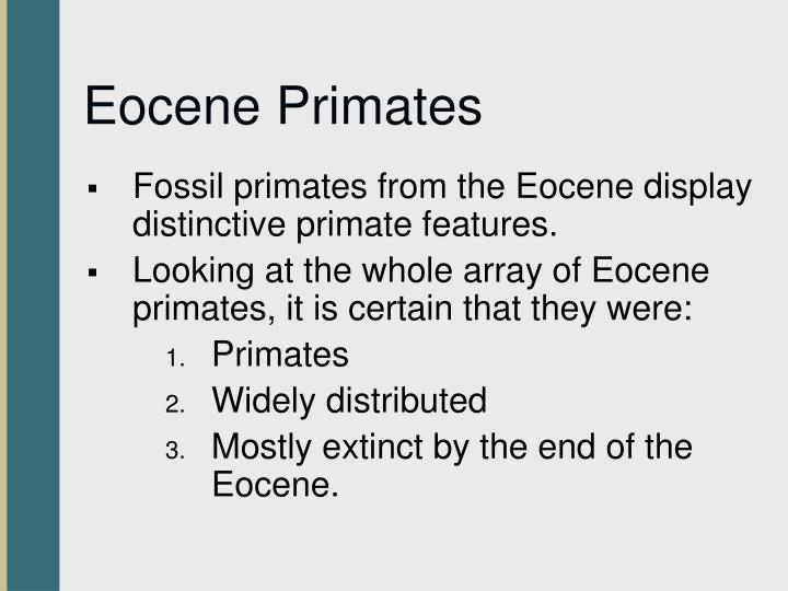 Eocene Primates