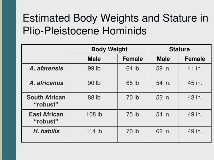 Estimated Body Weights and Stature in Plio-Pleistocene Hominids
