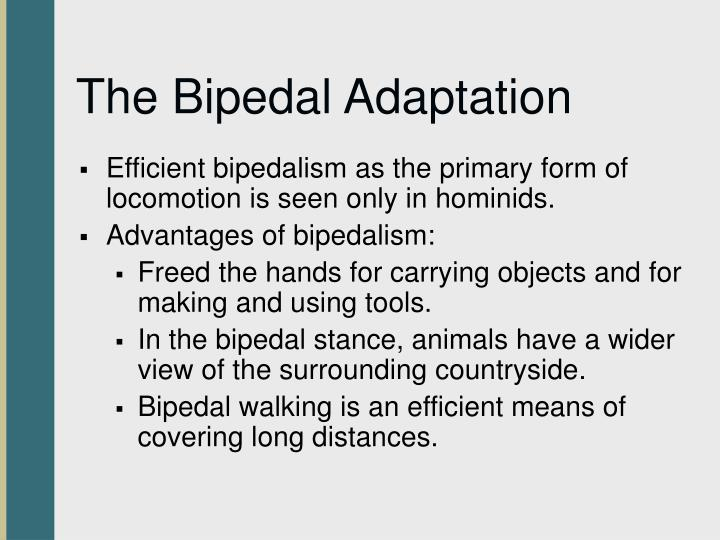 The Bipedal Adaptation