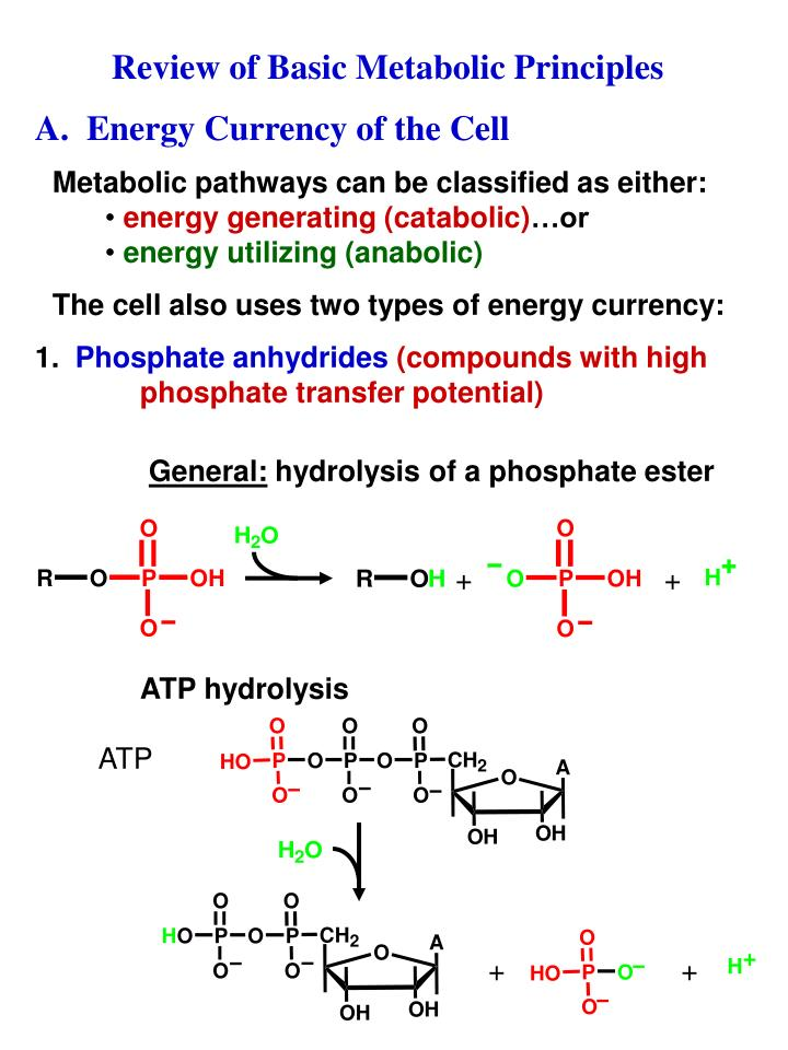 Review of Basic Metabolic Principles