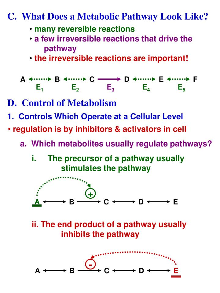 C.  What Does a Metabolic Pathway Look Like?