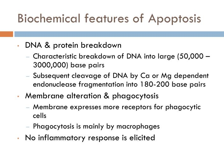 Biochemical features of Apoptosis