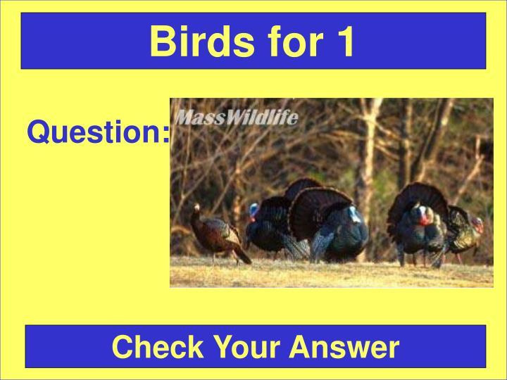 Birds for 1