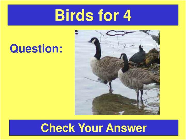Birds for 4