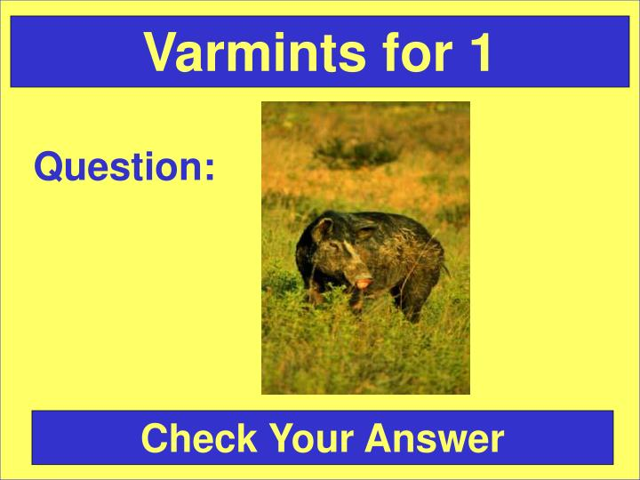 Varmints for 1