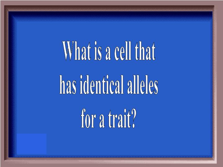 What is a cell that