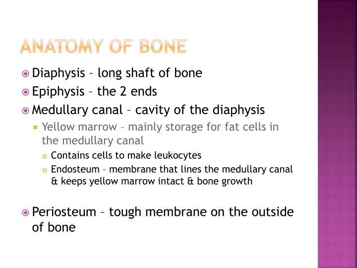 Anatomy of Bone