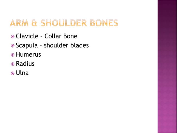 Arm & Shoulder Bones