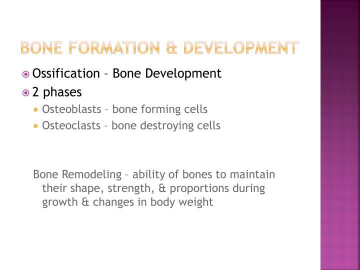 Bone formation & development