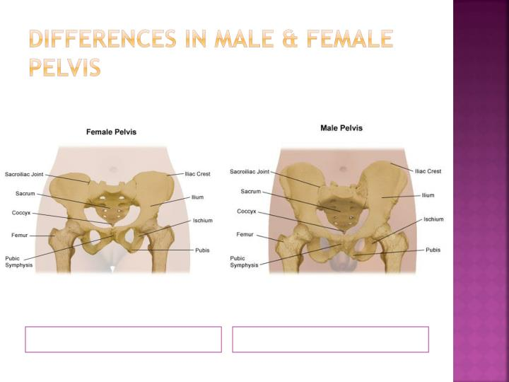 Differences in male & Female Pelvis