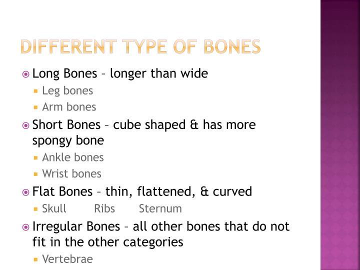 Different Type of Bones