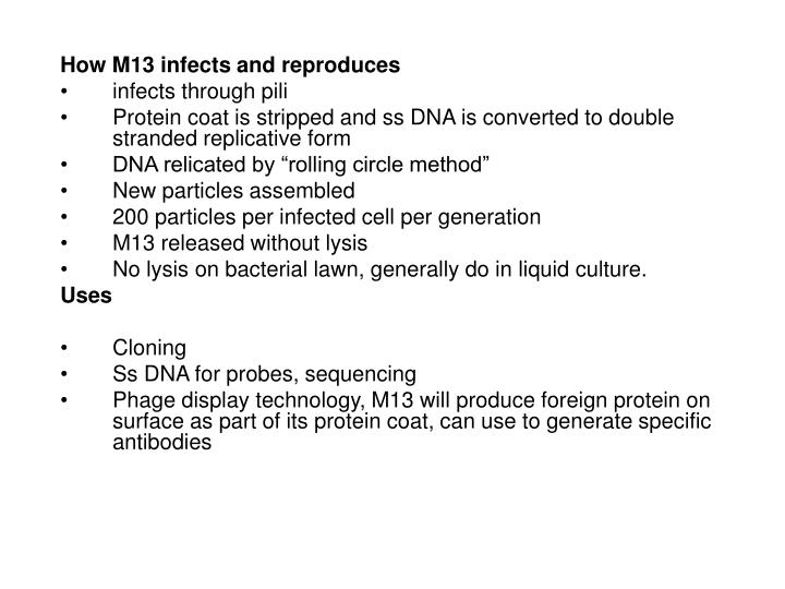 How M13 infects and reproduces