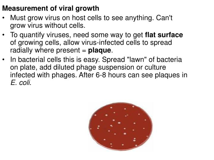 Measurement of viral growth