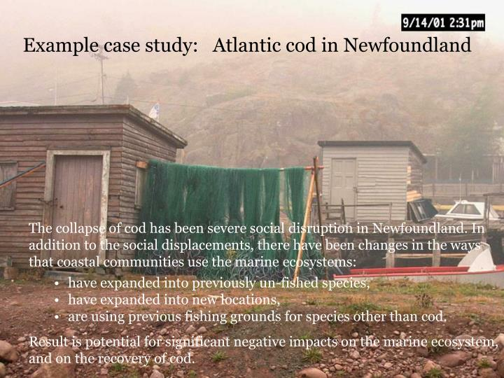 Example case study:   Atlantic cod in Newfoundland