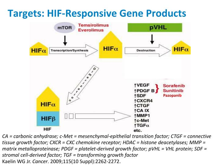 Targets: HIF-Responsive Gene Products