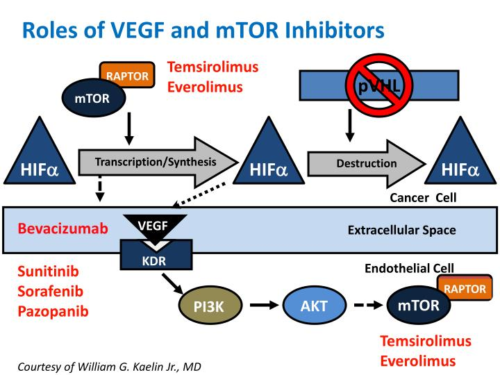 Roles of VEGF and mTOR Inhibitors