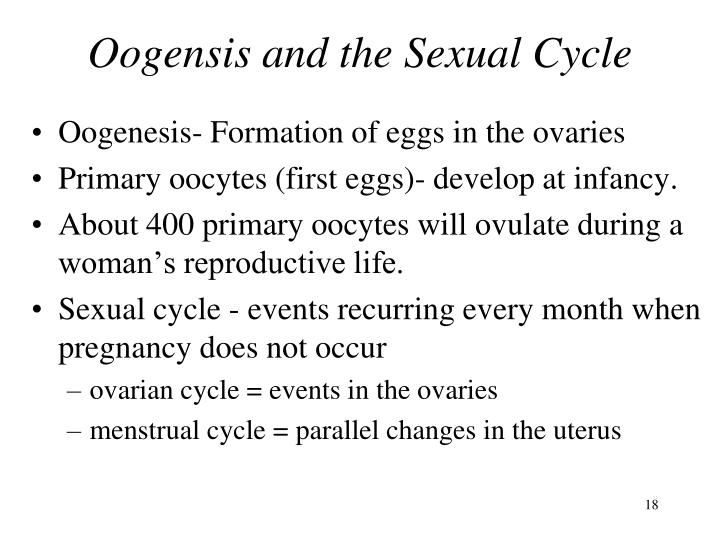 Oogensis and the Sexual Cycle
