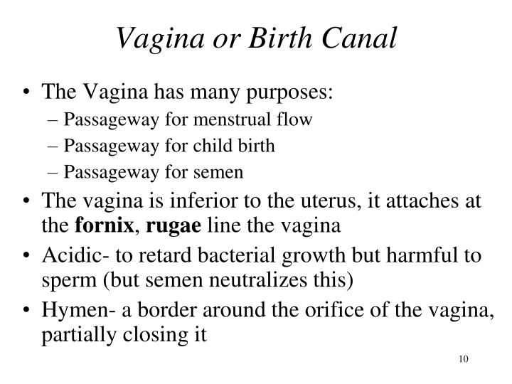 Vagina or Birth Canal