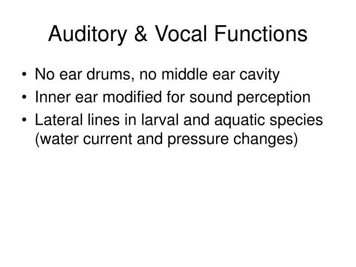 Auditory & Vocal Functions