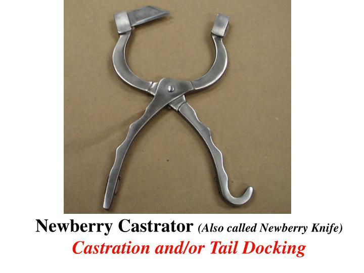 Newberry Castrator
