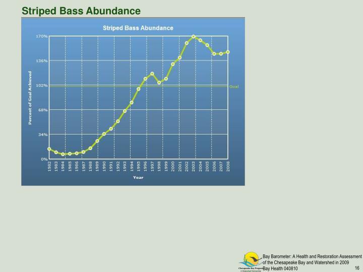 Striped Bass Abundance