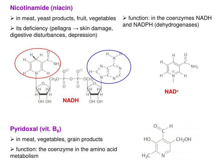 Nicotinamide (niacin)