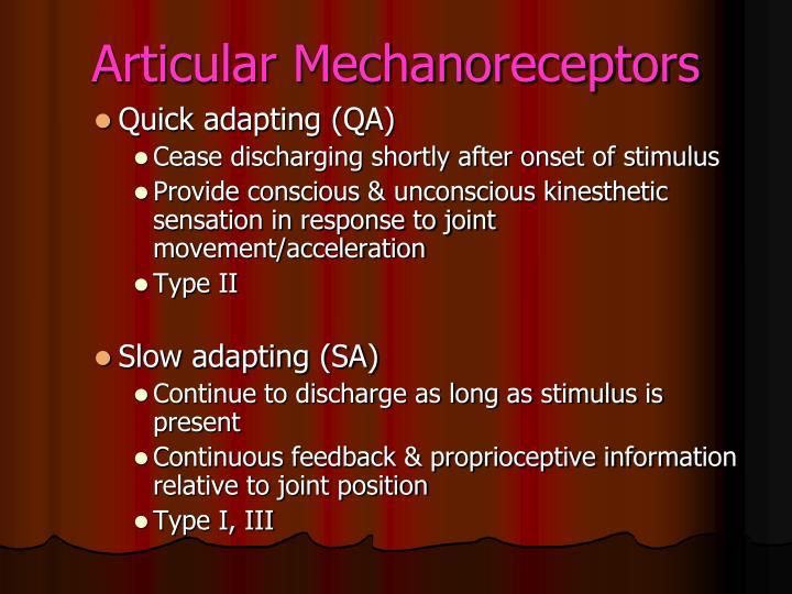 Articular Mechanoreceptors