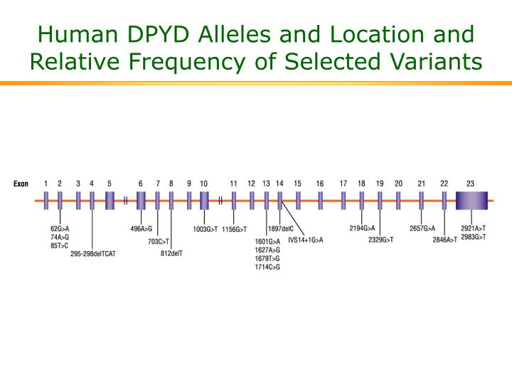 Human DPYD Alleles and Location and Relative Frequency of Selected Variants