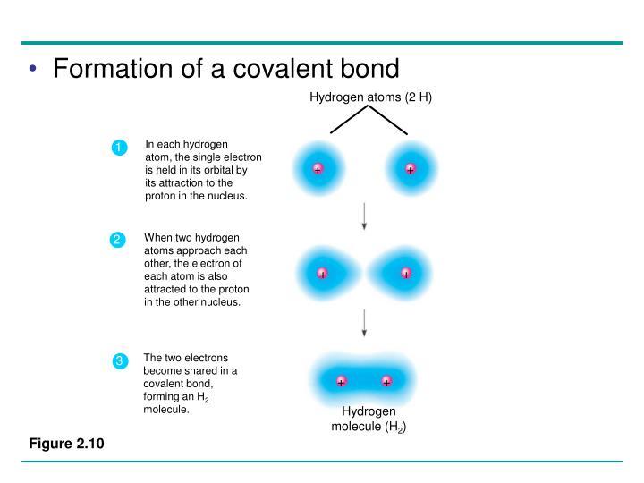 Hydrogen atoms (2 H)