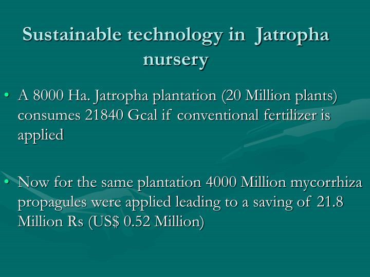 Sustainable technology in  Jatropha nursery