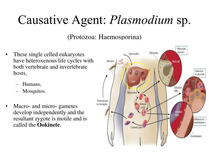 Causative Agent: