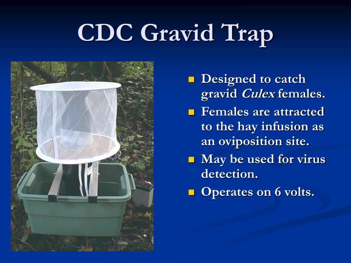 CDC Gravid Trap