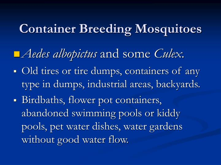 Container Breeding Mosquitoes