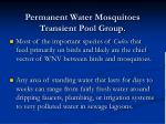 permanent water mosquitoes transient pool group