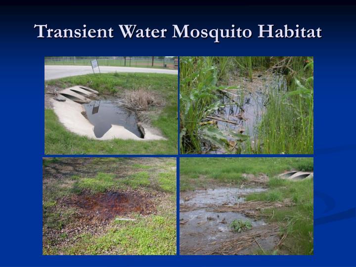 Transient Water Mosquito Habitat