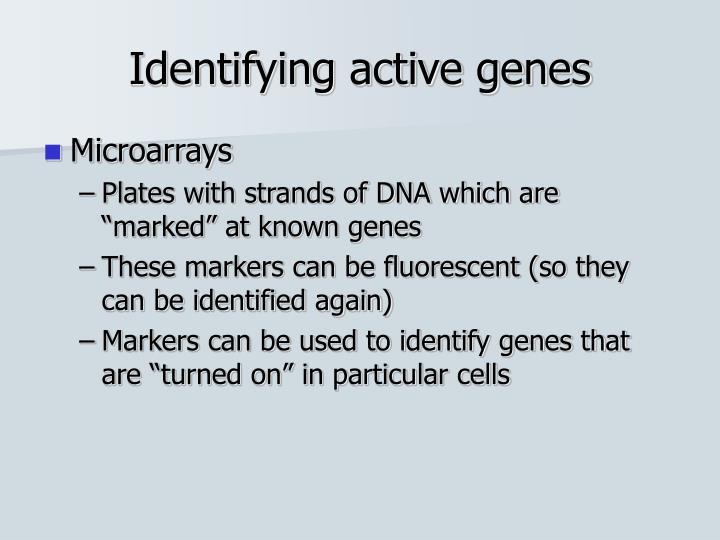 Identifying active genes