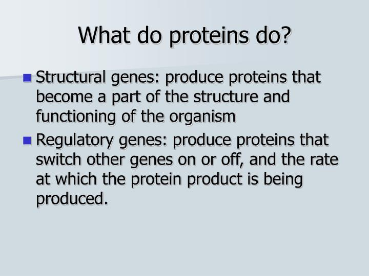 What do proteins do